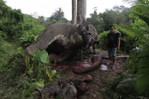 Die Elefanten verlieren nicht nur ihre Stoßzähne, sondern ach ihr Leben. (Foto: Getty Images)
