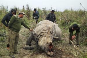 Die Wilderer sind nur an den Hörnern interessiert und lassen die leblosen Körper einfach zurück. (Foto: Getty Images)